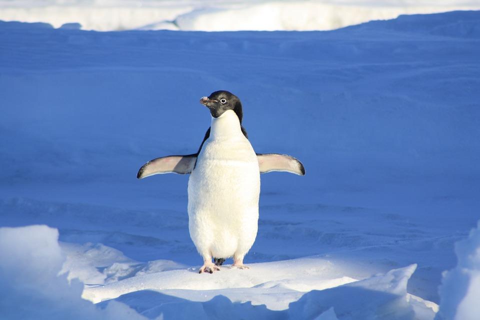 PENGUIN RESEARCH(ペンギンリサーチ)記事のまとめ